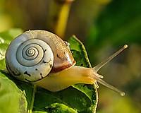 Snail405384__180