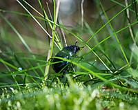 Beetle964653_960_720