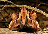 Butterfly743532__180