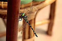 Dragonfly209746__180