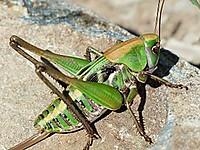 Grasshopper177350__180