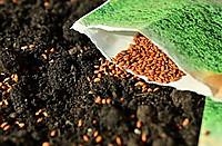 Seeds1302793__180